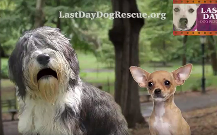 Last Day Dog Rescue Video